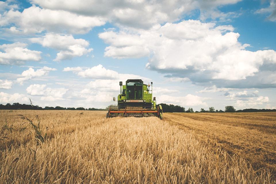 ¡Lignokel lanza nueva web como empresa de abonos y fertilizantes en España!