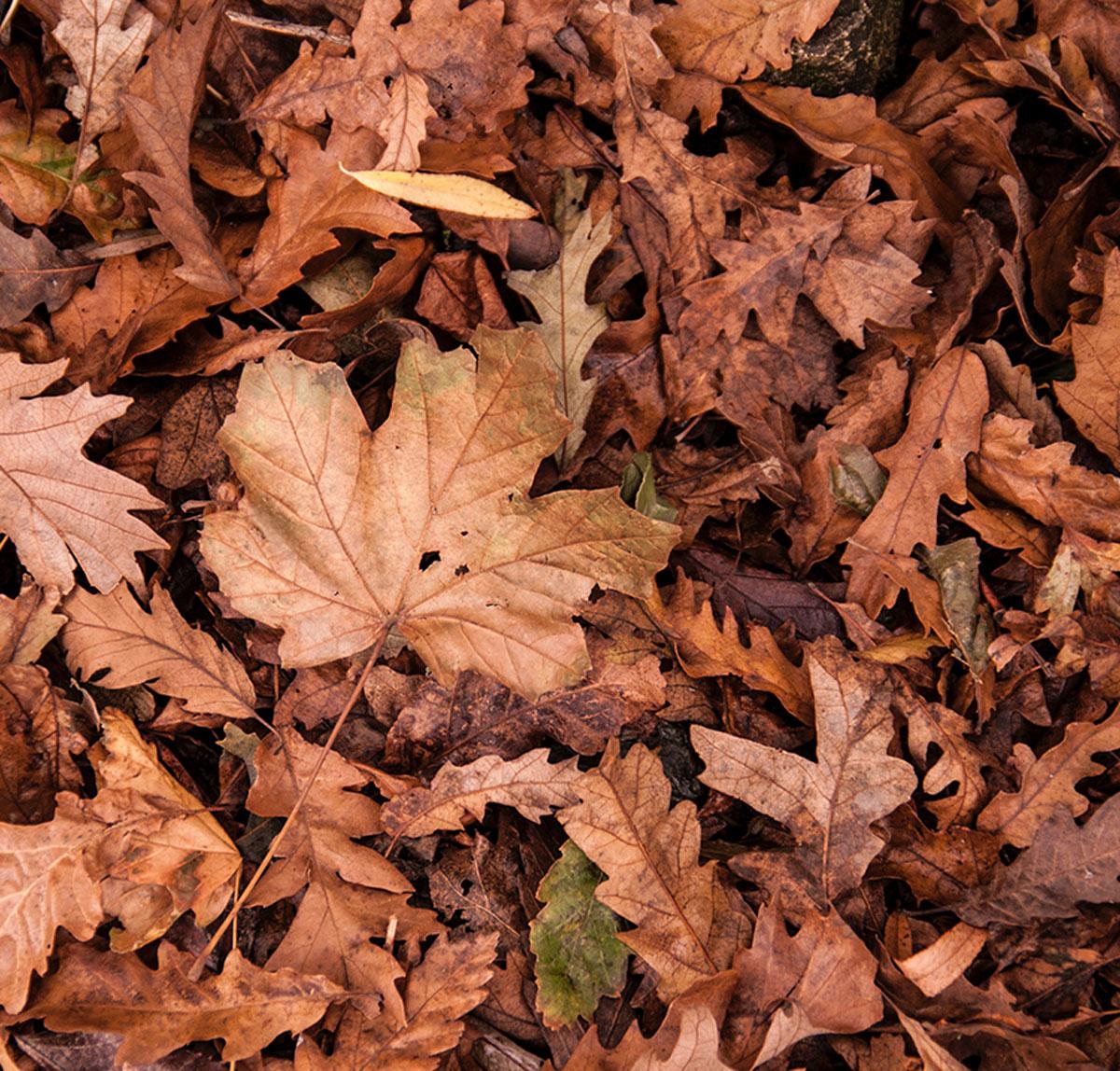cultivos horticolas de otoño - Lignokel