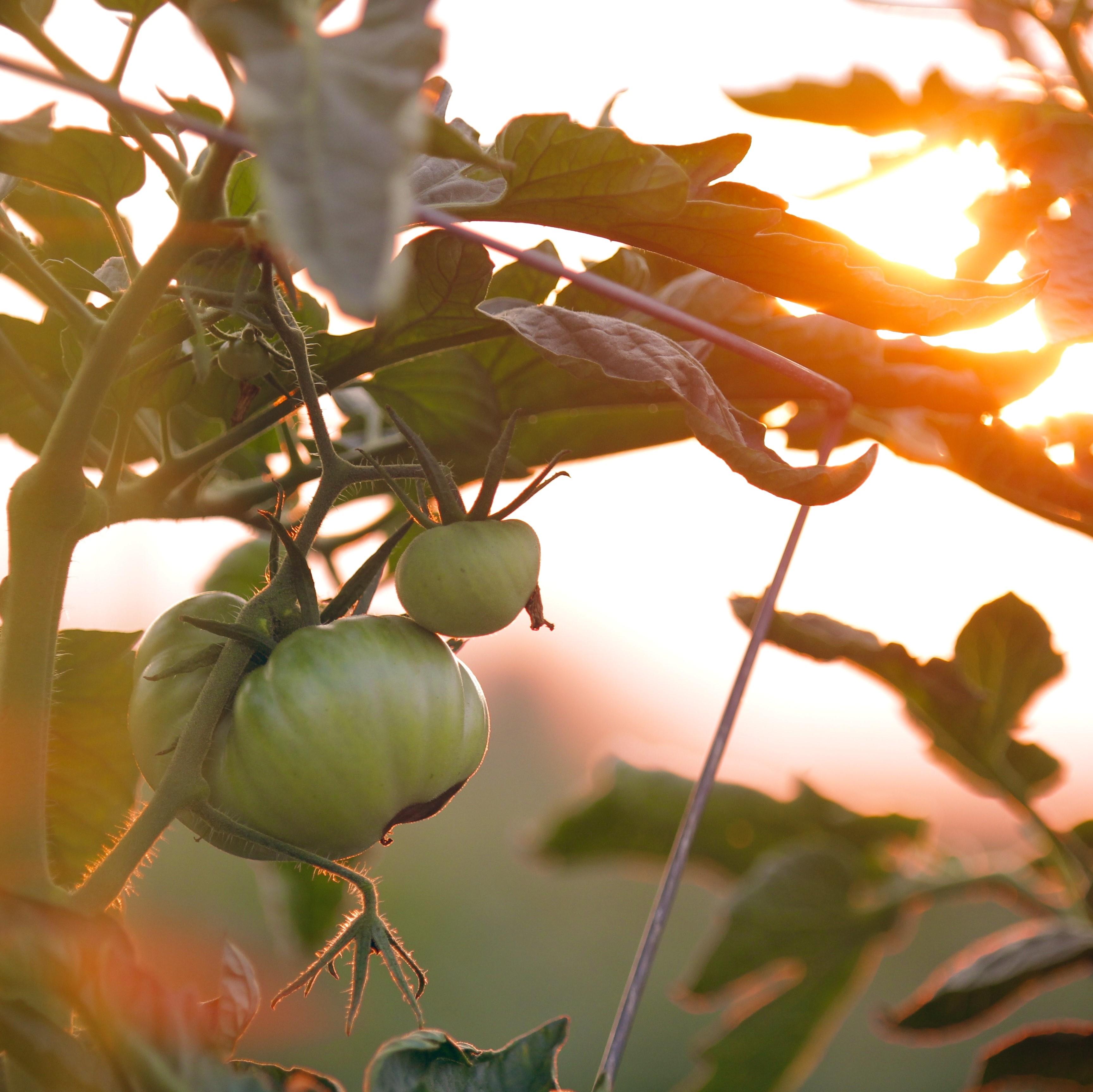 Cultivos hortícolas, recomendaciones para verano | Lignokel