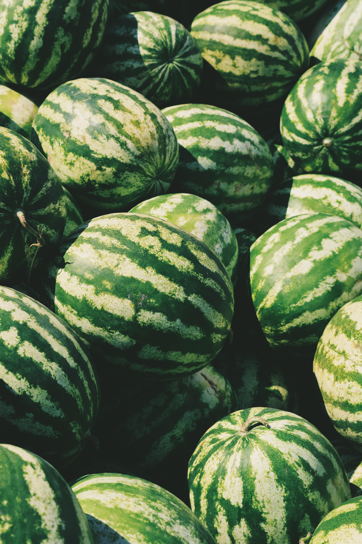 recomendaciones cultivo melon y sandia