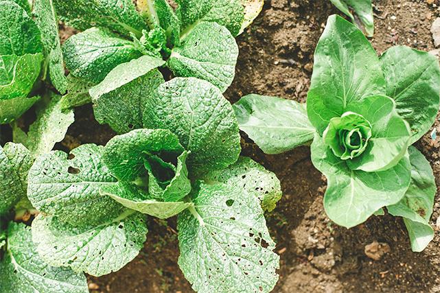 cultivo hortofruticolas al aire libre