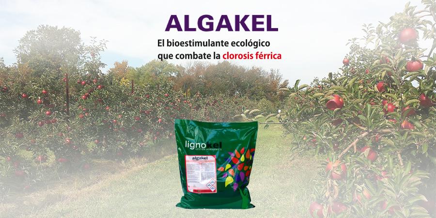 slider algakel responsive