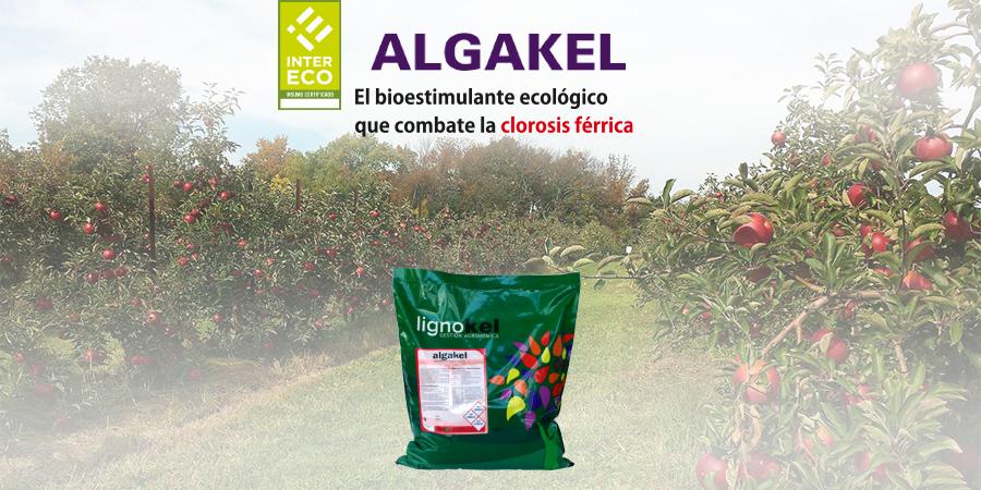 slide algakel responsive