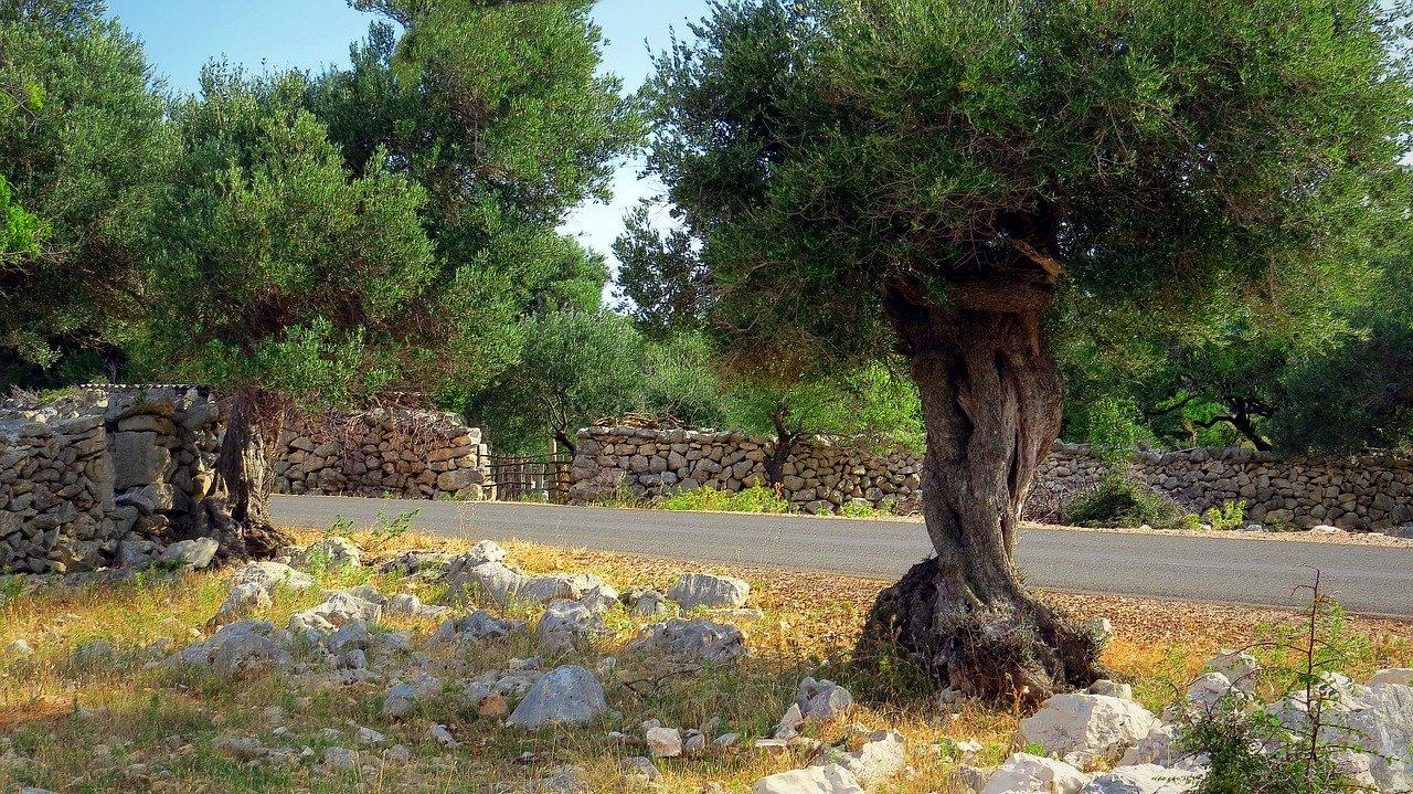 tratamientos foliares olivar